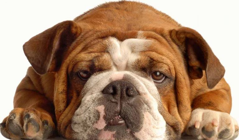 20 Best Medium-Sized Dogs You Have To Own