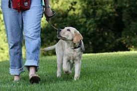 dog training on leash