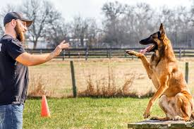 dog trainer and dog