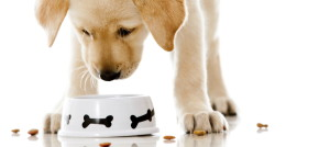 Your Guide to Finding a Healthy Dog Food