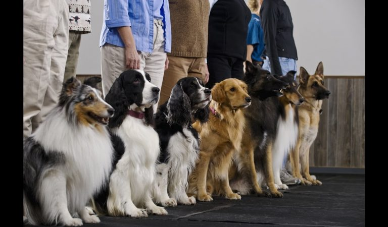 What to Expect at Dog Training Schools