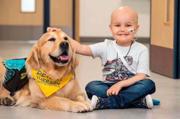 therapy dog with small child