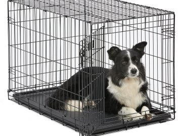 Sheep Dog in crate