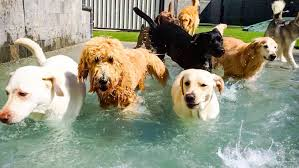 Doggy Day Care: What to Expect